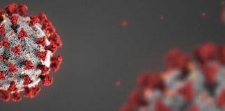 coronavirus torrenting